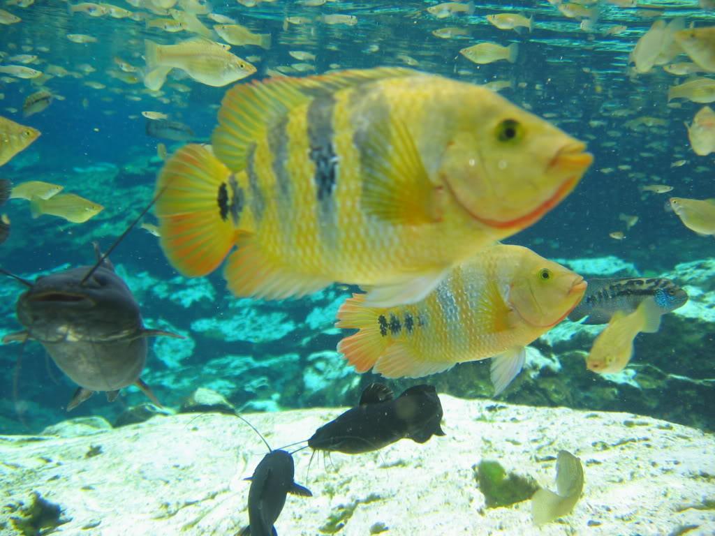 Мир рыб в Мексике. Парк Шельха