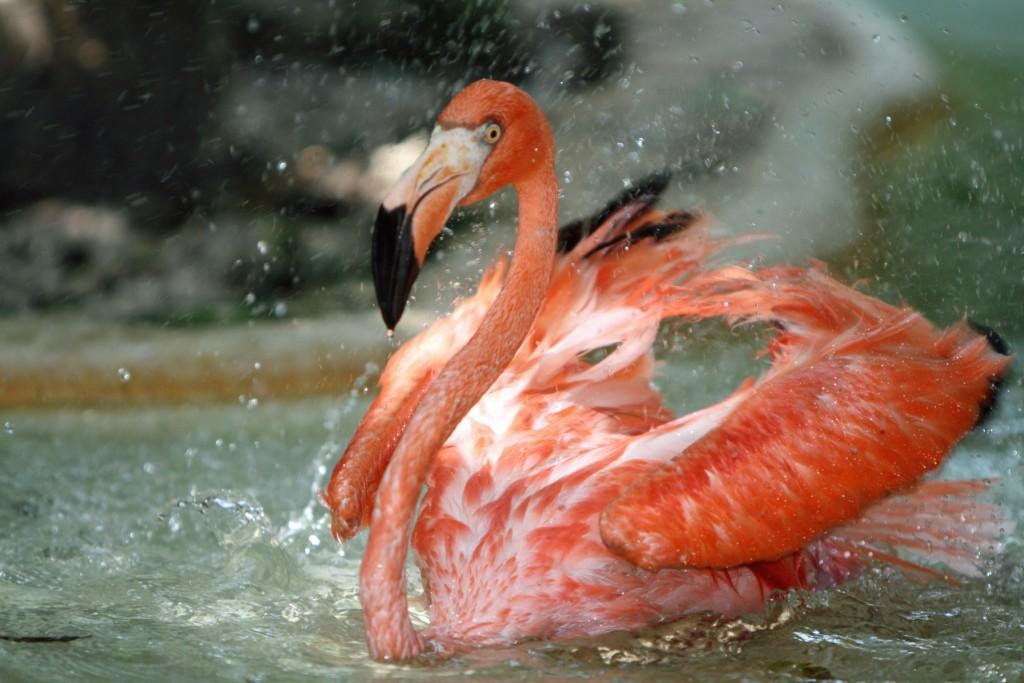 Фламинго в Мексике. Шкарет рапк. В парке. Животные и птицы.