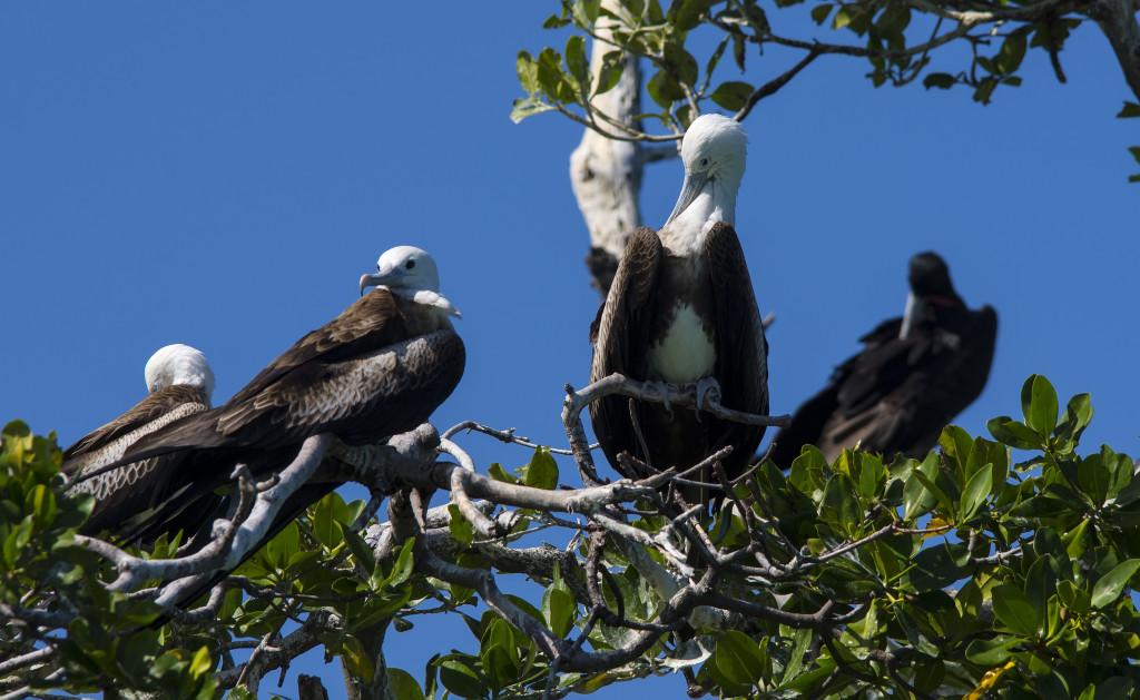 Гнездовье птиц в парке