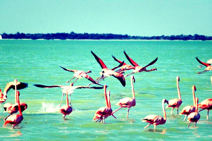 Фламинго на птичьем острове. Холбош