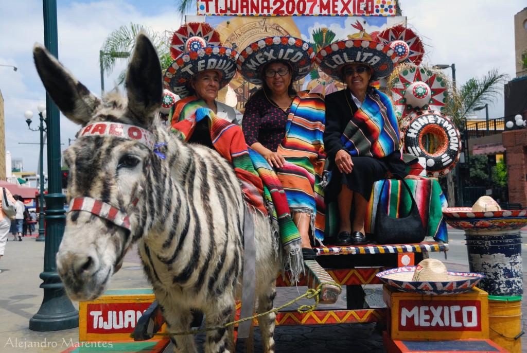 Зеброослик в Тихуане. Туристический атракцион
