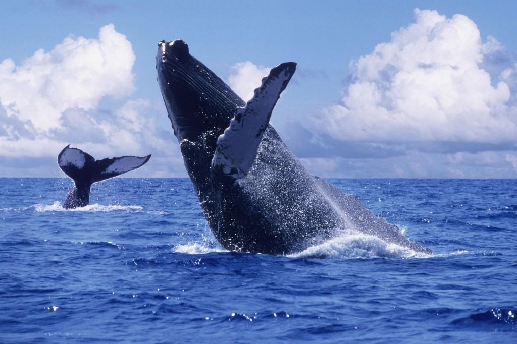 Наблюдение за синими китами в Нуэво Вальярта, Наярит, Мексика