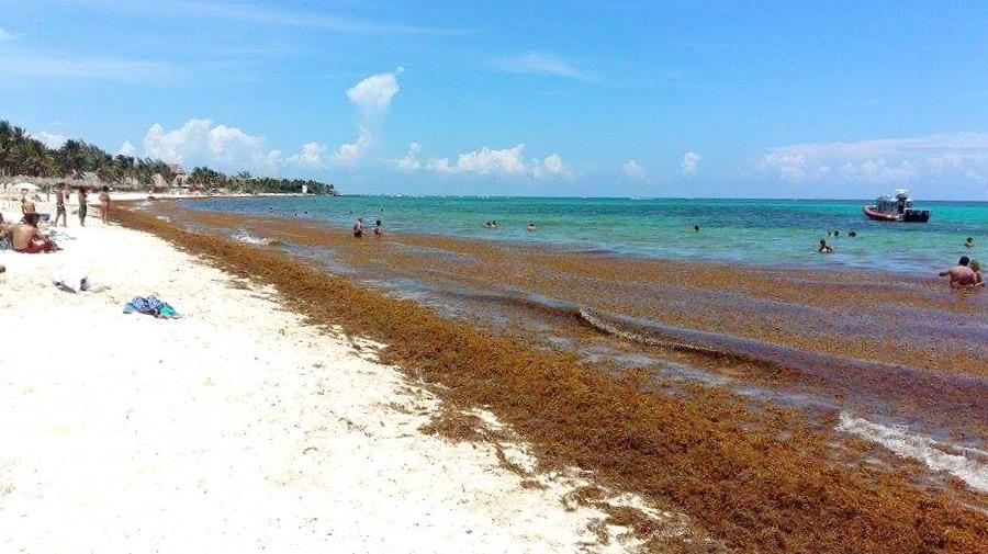 Пляжи Карибского моря покрытые водорослями, Мексика