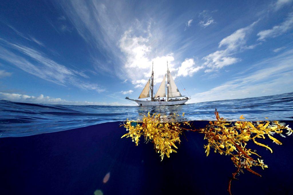 Миграция морских водорослей. Мексика