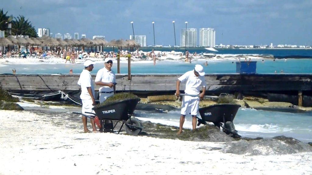 Меры по борьбе с морскими водорослями на пляжах карибского моря. Мексика