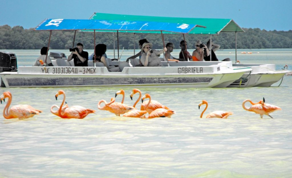 Экскурсионная прогулка на лодке по мангровым зарослям заповедника Селестун. Встреча с фламинго.