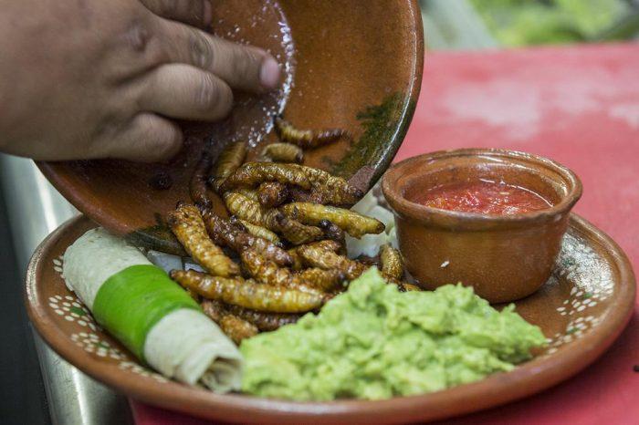 Личинки агавы